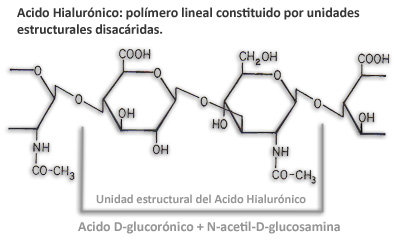 Acido Hialurónico, polímero lineal donde se repite una sucesión de unidades disacáridas particulares